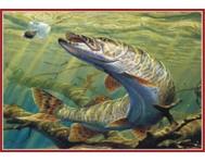 Рыбы - ТР