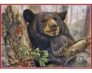 Медведи - ТВМ